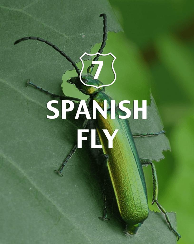 Spanish Fly Alternative to Viagra