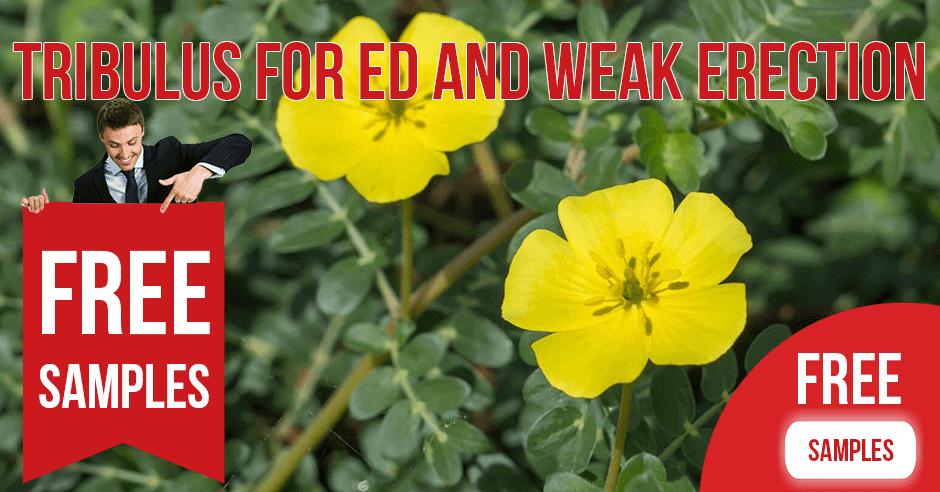 Tribulus for ED and Weak Erection
